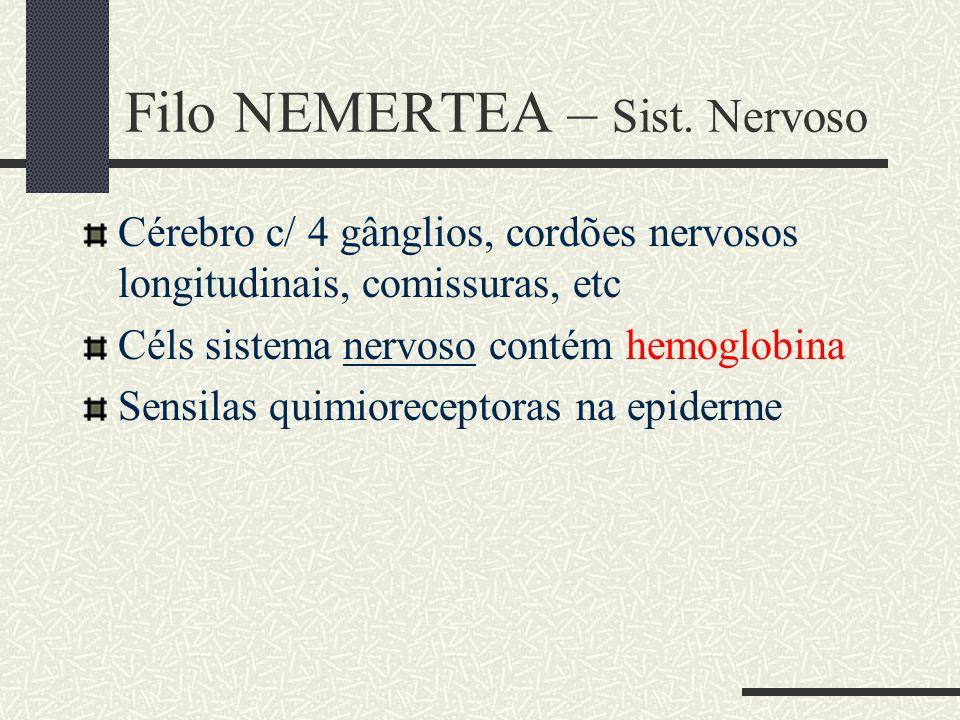 Filo NEMERTEA – Sist. Nervoso