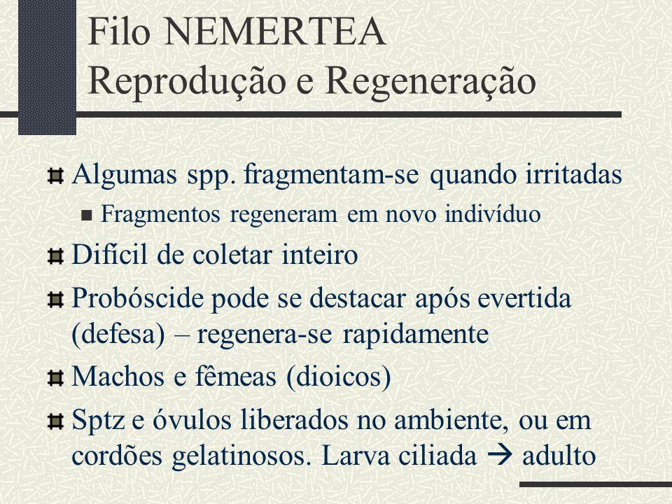 Filo NEMERTEA Reprodução e Regeneração