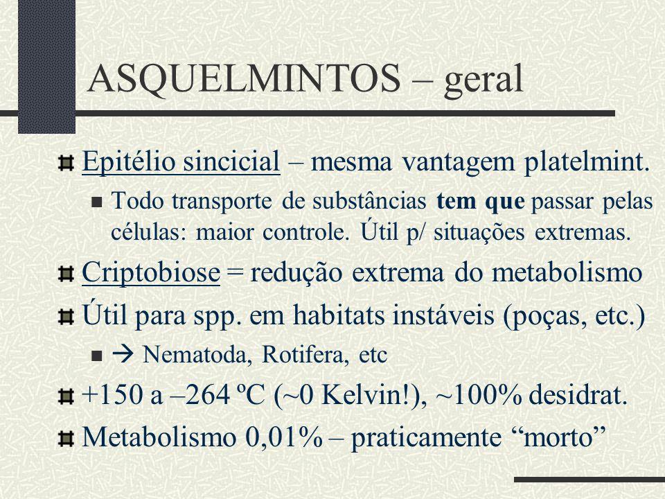 ASQUELMINTOS – geral Epitélio sincicial – mesma vantagem platelmint.