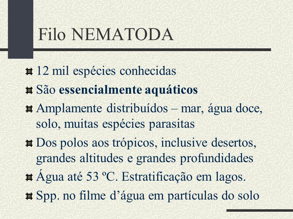 Filo NEMATODA 12 mil espécies conhecidas São essencialmente aquáticos