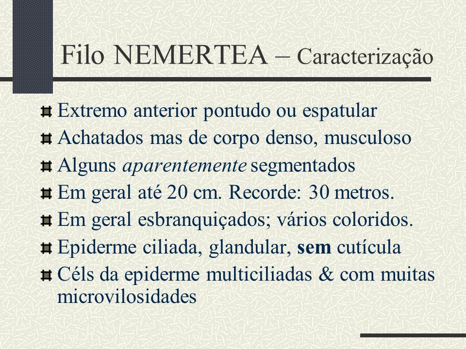 Filo NEMERTEA – Caracterização
