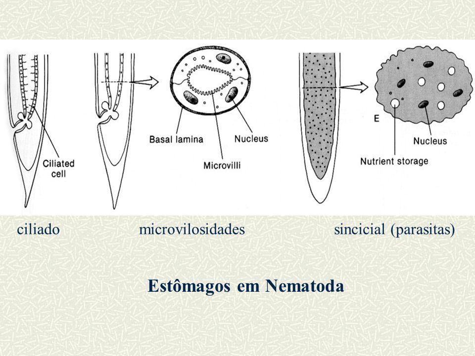 ciliado microvilosidades sincicial (parasitas)