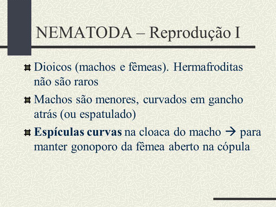 NEMATODA – Reprodução I