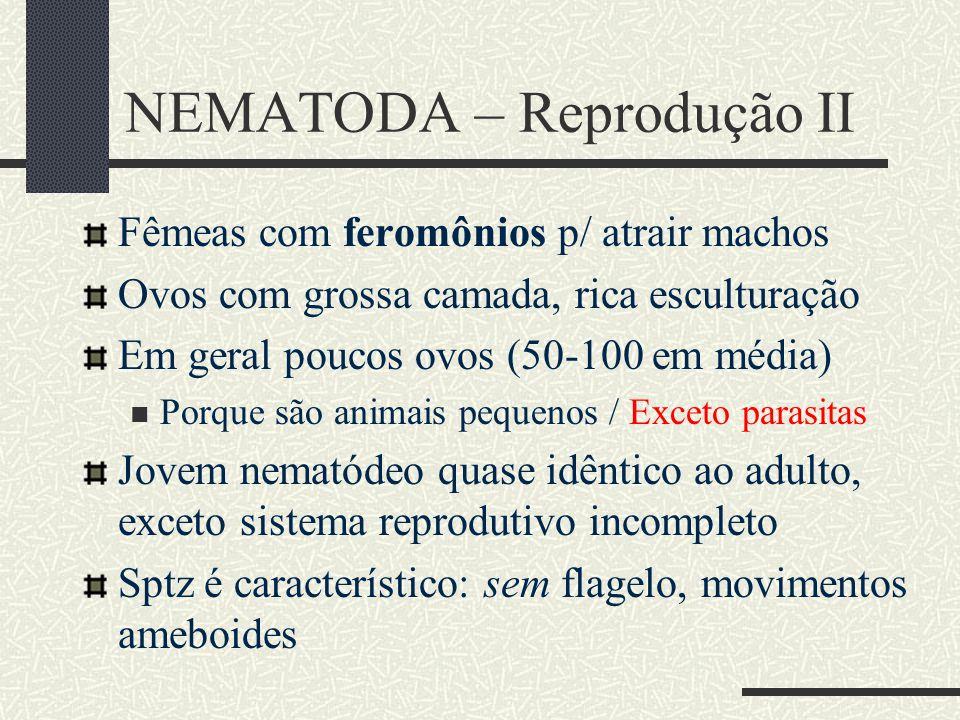 NEMATODA – Reprodução II