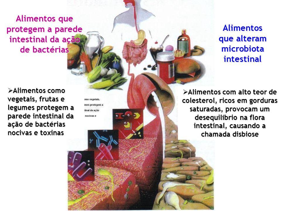 Alimentos que protegem a parede intestinal da ação de bactérias