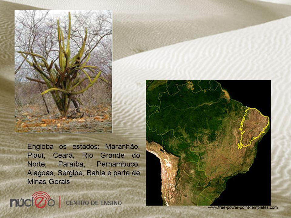 Engloba os estados: Maranhão, Piauí, Ceará, Rio Grande do Norte, Paraíba, Pernambuco, Alagoas, Sergipe, Bahia e parte de Minas Gerais