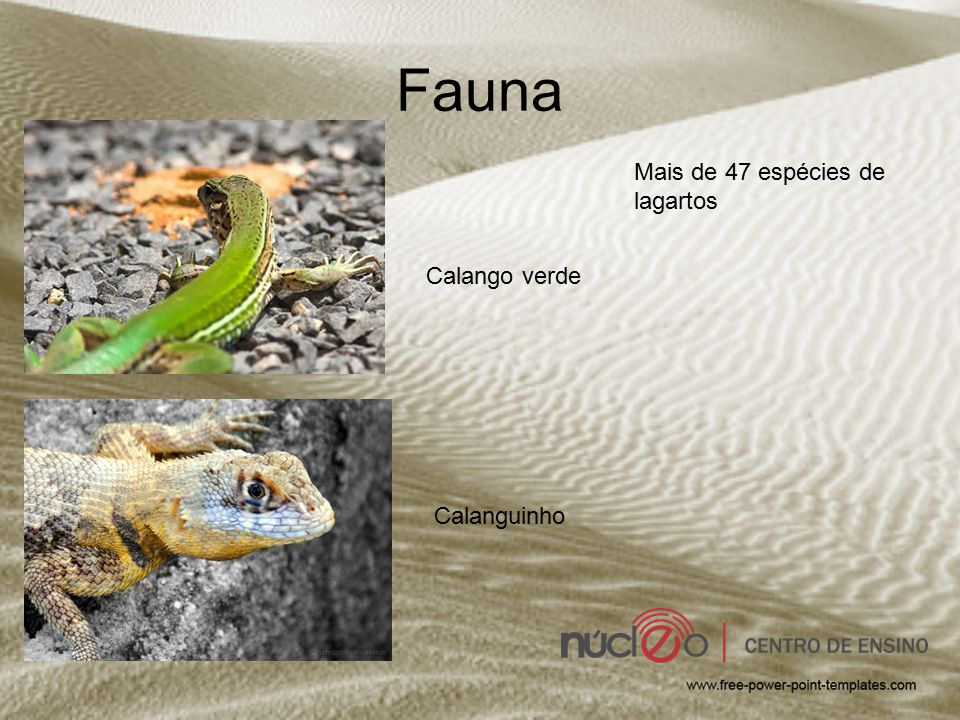 Fauna Mais de 47 espécies de lagartos Calango verde Calanguinho