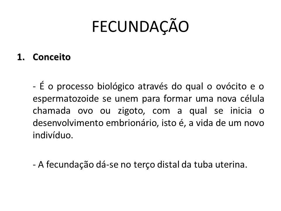 FECUNDAÇÃO Conceito.