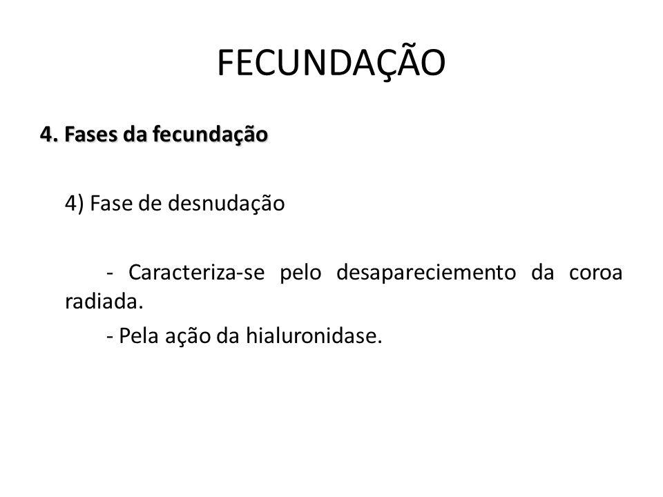 FECUNDAÇÃO 4.