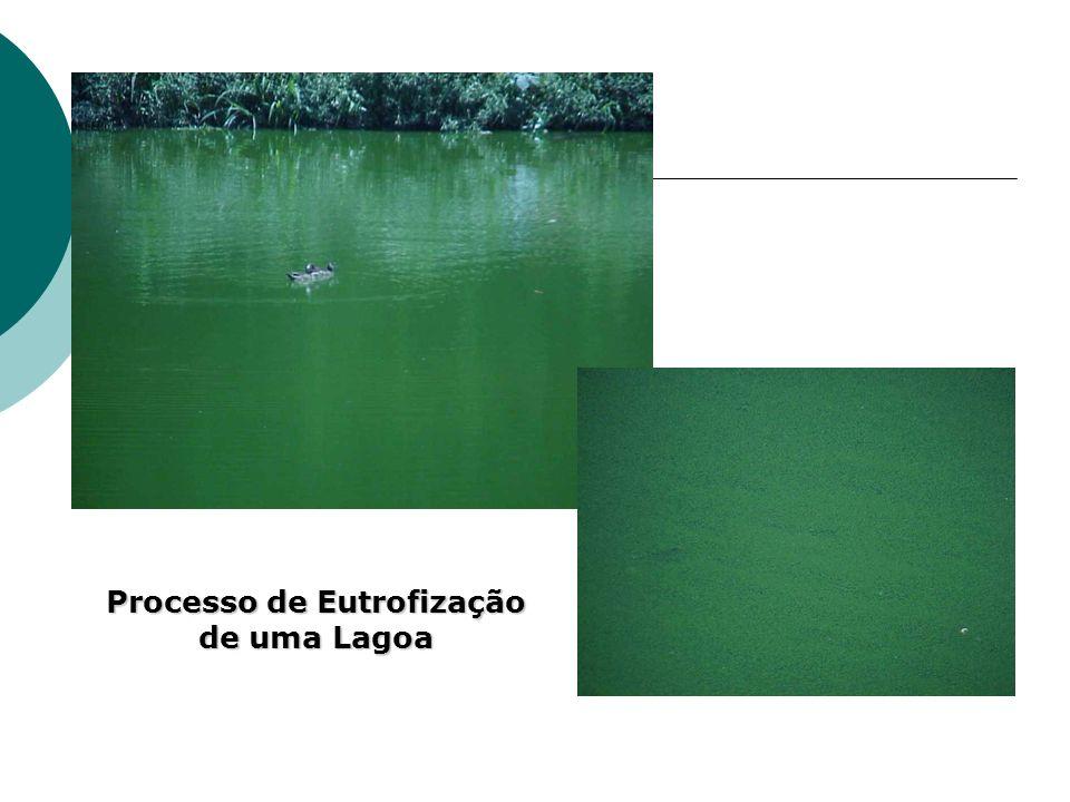 Processo de Eutrofização de uma Lagoa