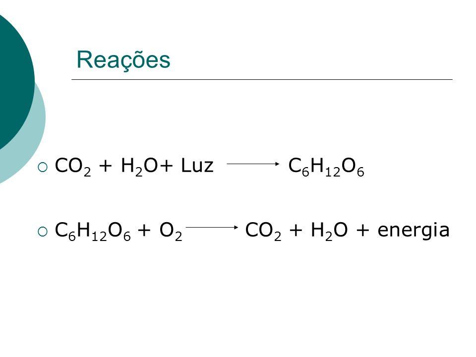 Reações CO2 + H2O+ Luz C6H12O6 C6H12O6 + O2 CO2 + H2O + energia