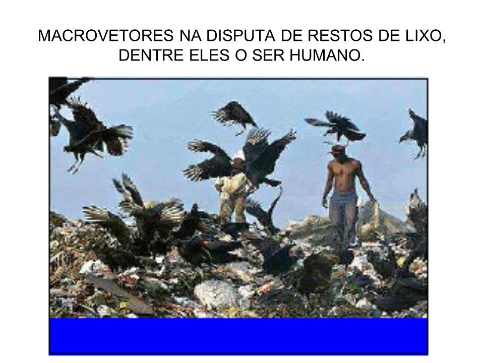 MACROVETORES NA DISPUTA DE RESTOS DE LIXO, DENTRE ELES O SER HUMANO.