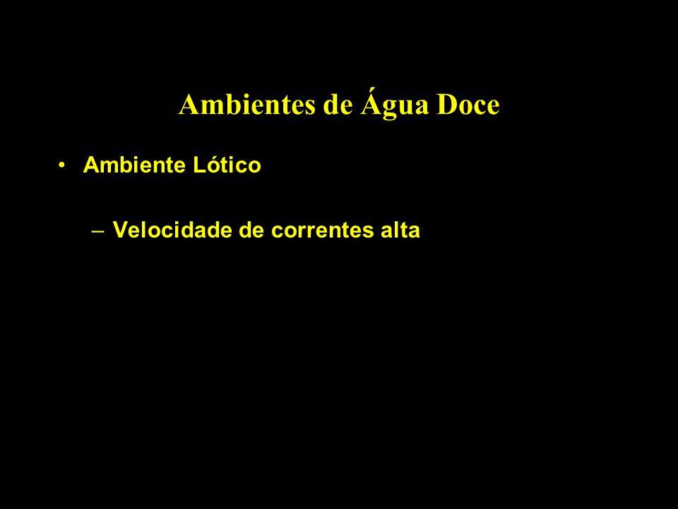 Ambientes de Água Doce Ambiente Lótico Velocidade de correntes alta