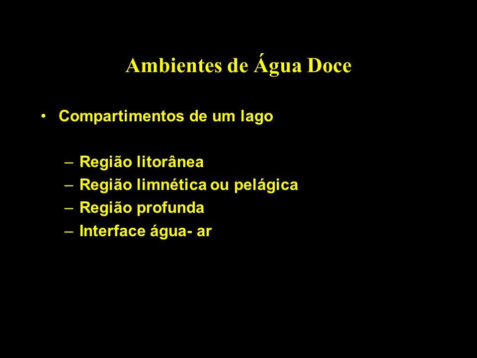 Ambientes de Água Doce Compartimentos de um lago Região litorânea