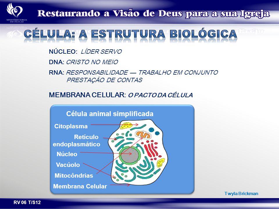 Célula: a estrutura biológica