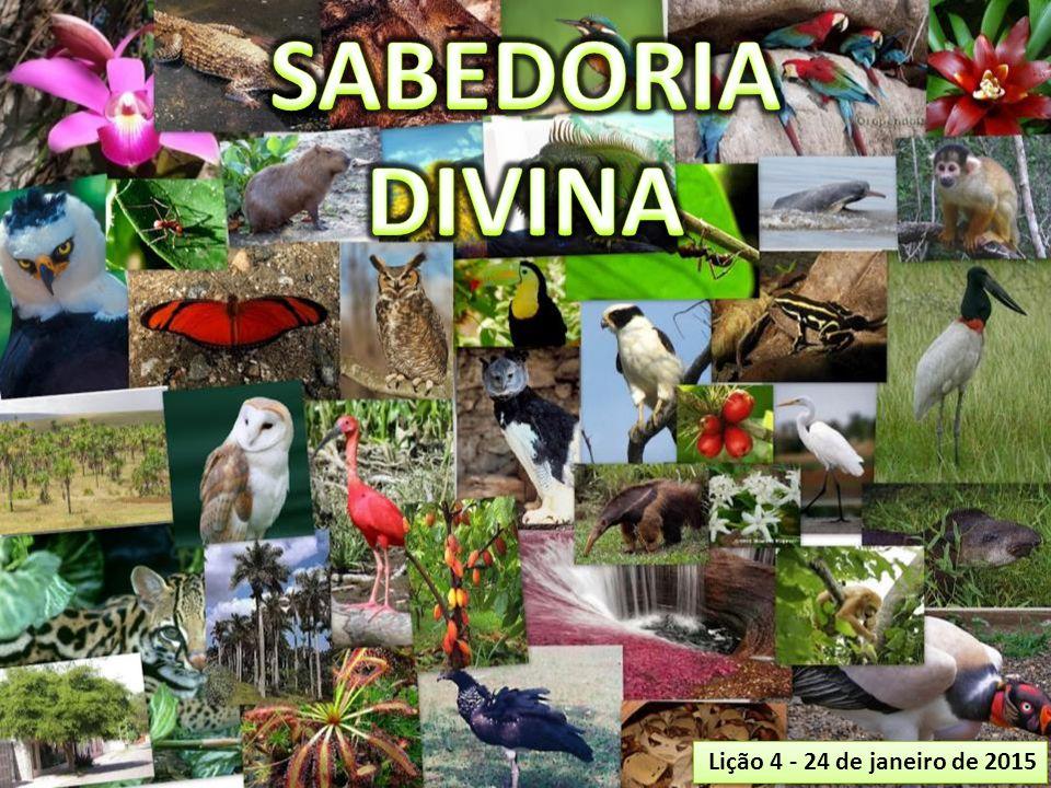 SABEDORIA DIVINA Lição 4 - 24 de janeiro de 2015