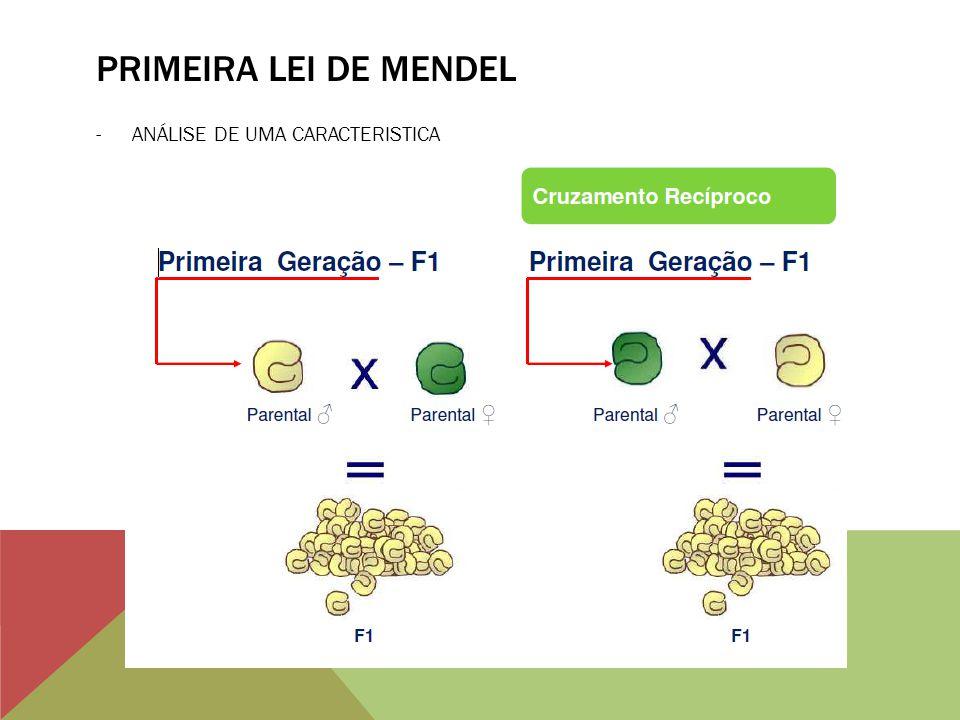 PRIMEIRA LEI DE MENDEL ANÁLISE DE UMA CARACTERISTICA