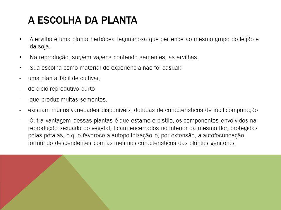 A ESCOLHA DA PLANTA A ervilha é uma planta herbácea leguminosa que pertence ao mesmo grupo do feijão e da soja.