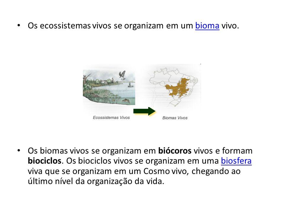 Os ecossistemas vivos se organizam em um bioma vivo.