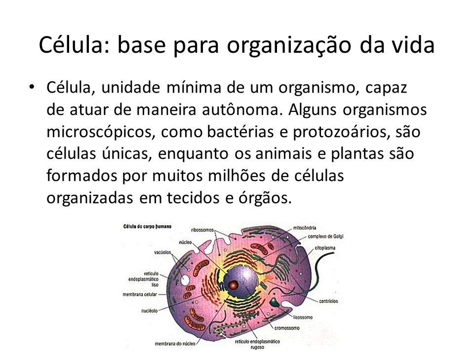 Célula: base para organização da vida
