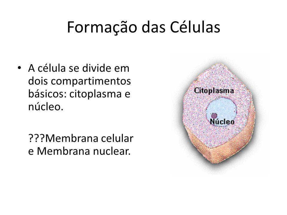Formação das CélulasA célula se divide em dois compartimentos básicos: citoplasma e núcleo.