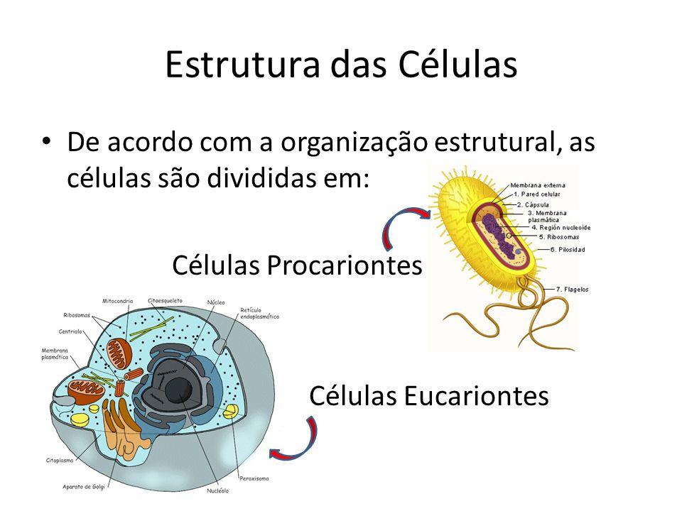 Estrutura das Células De acordo com a organização estrutural, as células são divididas em: Células Procariontes.