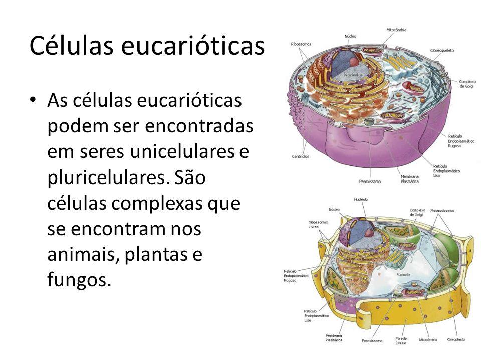 Células eucarióticas