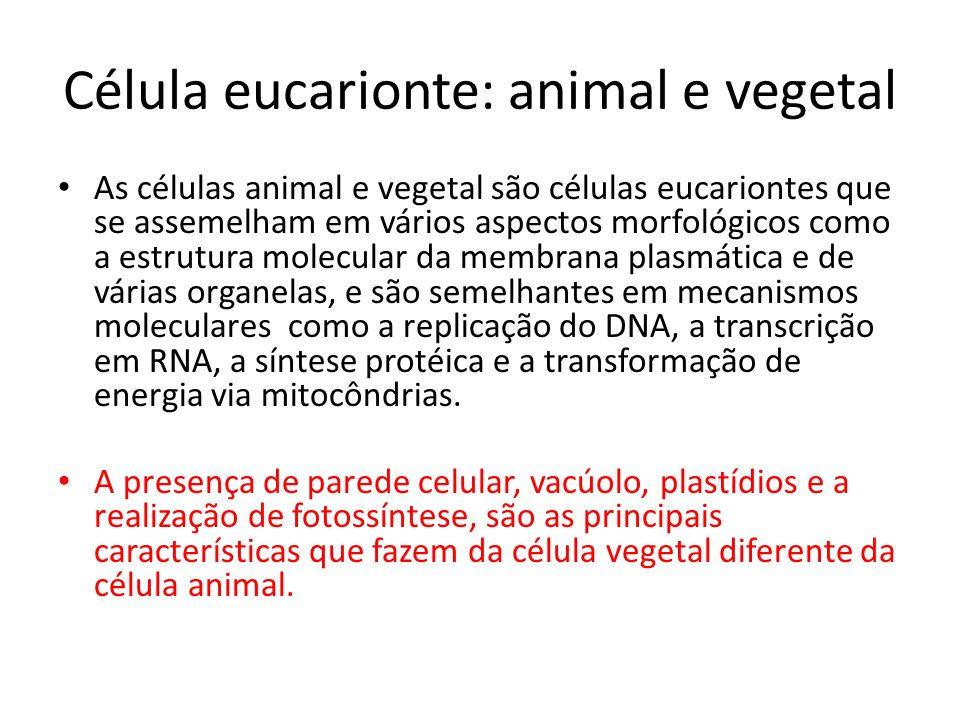 Célula eucarionte: animal e vegetal