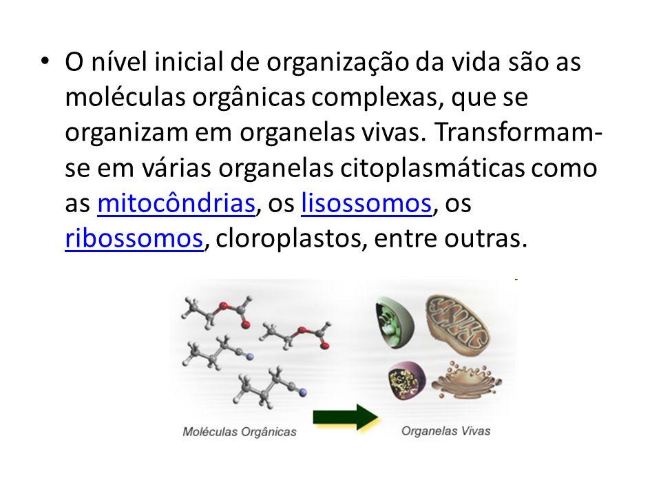 O nível inicial de organização da vida são as moléculas orgânicas complexas, que se organizam em organelas vivas.