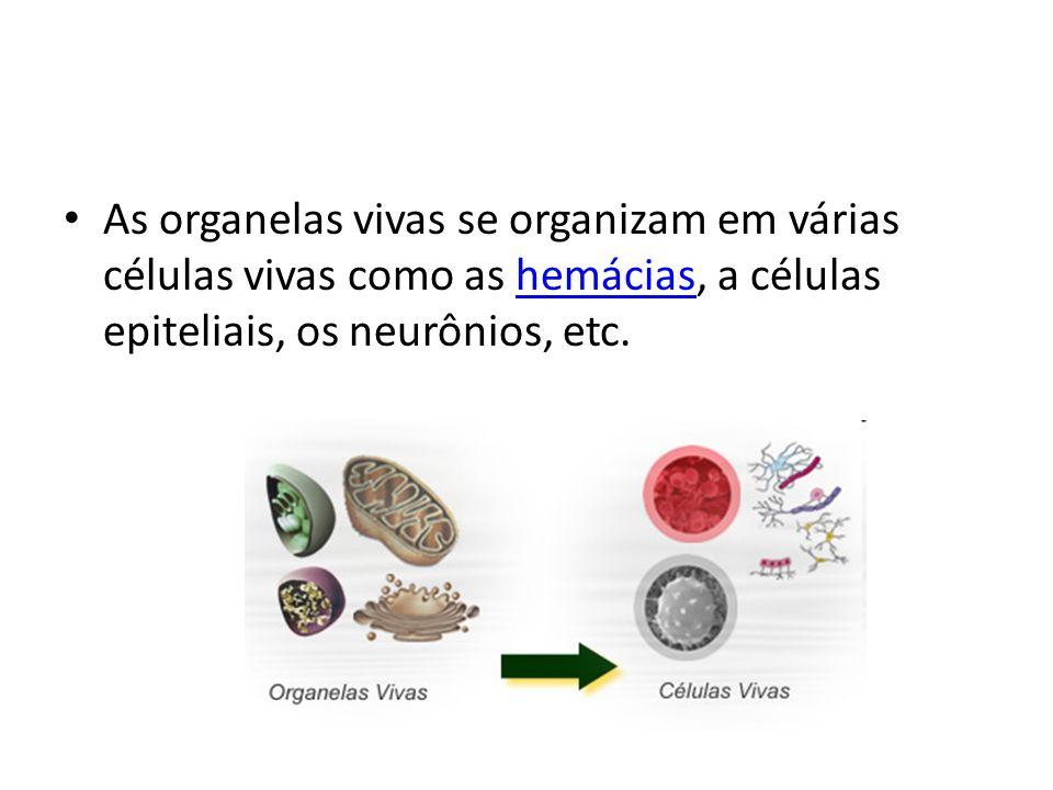 As organelas vivas se organizam em várias células vivas como as hemácias, a células epiteliais, os neurônios, etc.