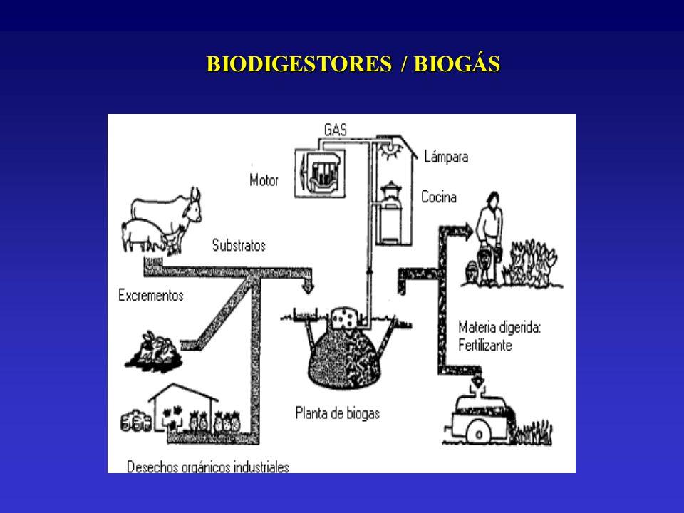 BIODIGESTORES / BIOGÁS