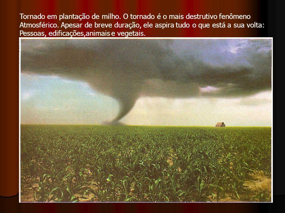Tornado em plantação de milho. O tornado é o mais destrutivo fenômeno