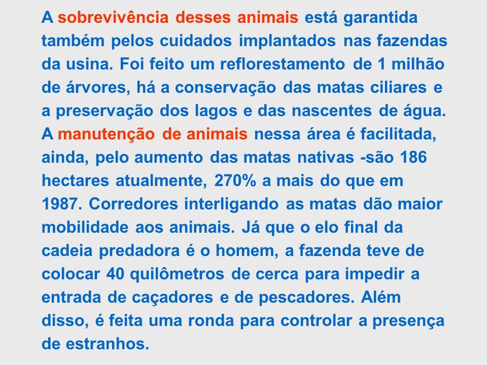 A sobrevivência desses animais está garantida também pelos cuidados implantados nas fazendas da usina.
