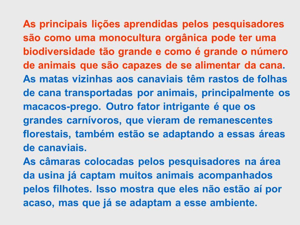 As principais lições aprendidas pelos pesquisadores são como uma monocultura orgânica pode ter uma biodiversidade tão grande e como é grande o número de animais que são capazes de se alimentar da cana. As matas vizinhas aos canaviais têm rastos de folhas de cana transportadas por animais, principalmente os macacos-prego. Outro fator intrigante é que os grandes carnívoros, que vieram de remanescentes florestais, também estão se adaptando a essas áreas de canaviais.