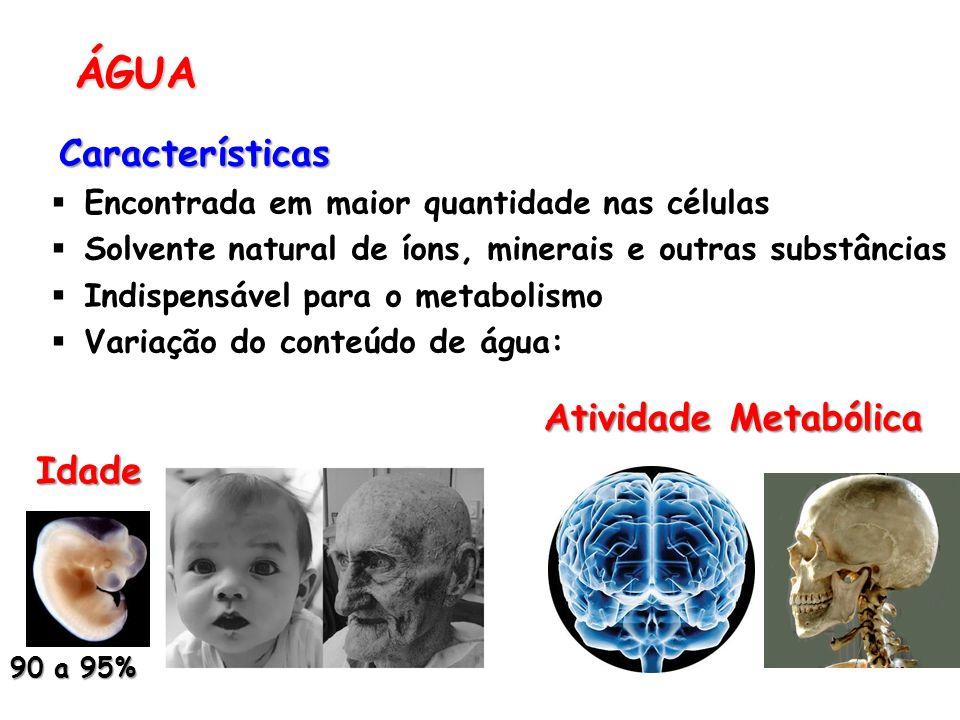 ÁGUA Características Atividade Metabólica Idade