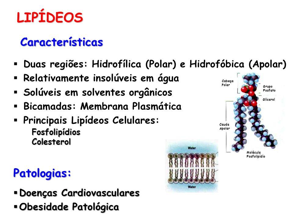 LIPÍDEOS Características Patologias:
