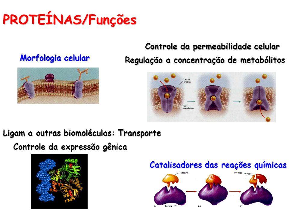PROTEÍNAS/Funções Controle da permeabilidade celular