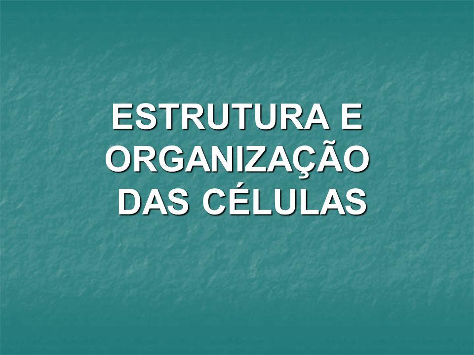 ESTRUTURA E ORGANIZAÇÃO DAS CÉLULAS
