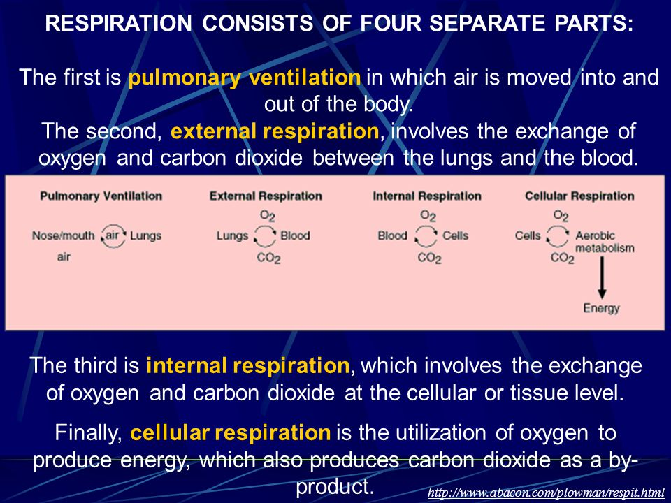 RESPIRATION CONSISTS OF FOUR SEPARATE PARTS: