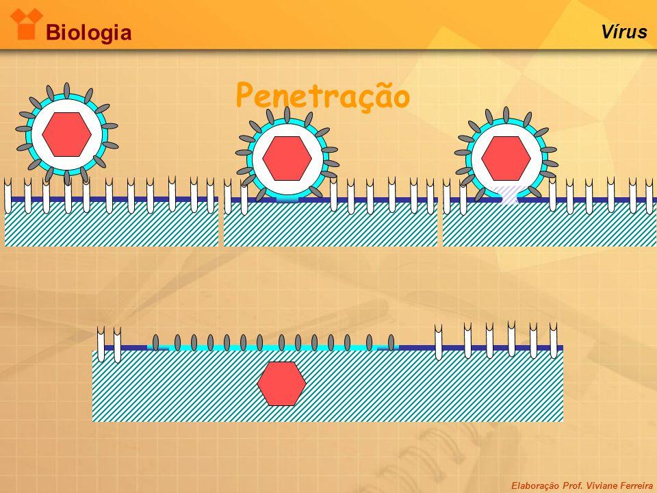Biologia Vírus Penetração Elaboração Prof. Viviane Ferreira