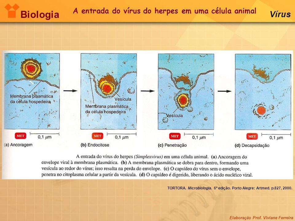 A entrada do vírus do herpes em uma célula animal