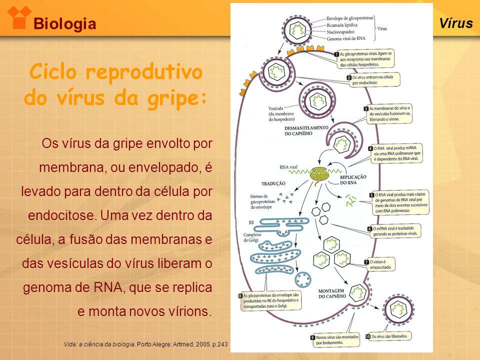 Ciclo reprodutivo do vírus da gripe: