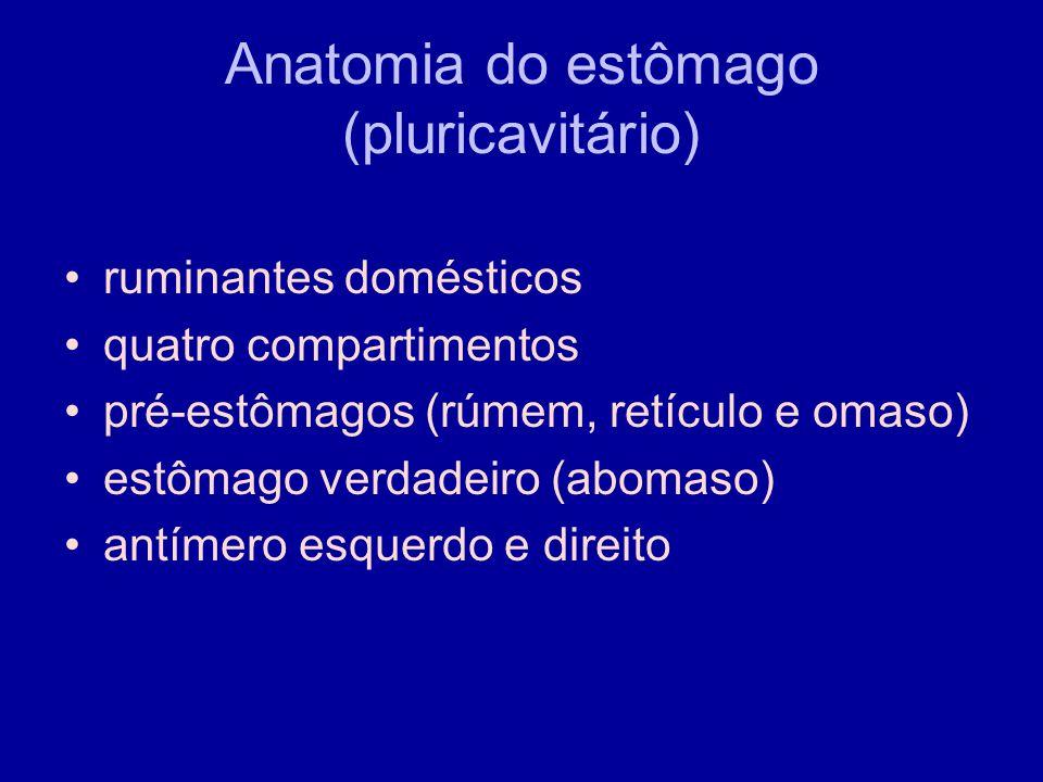 Anatomia do estômago (pluricavitário)