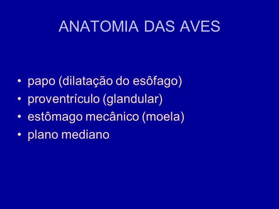 ANATOMIA DAS AVES papo (dilatação do esôfago)