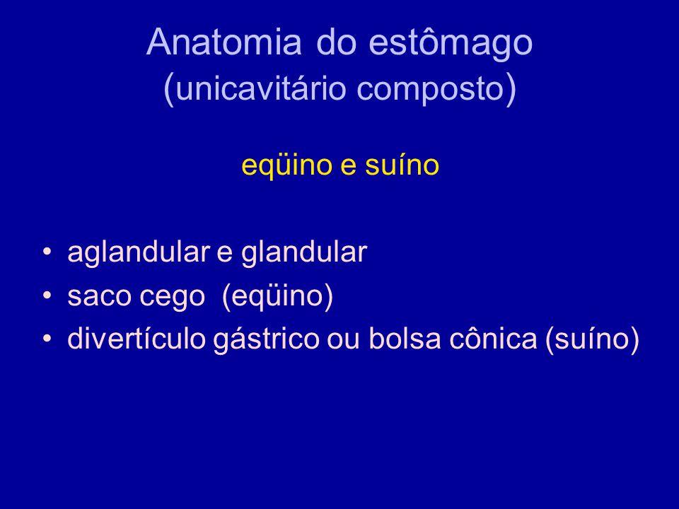 Anatomia do estômago (unicavitário composto)