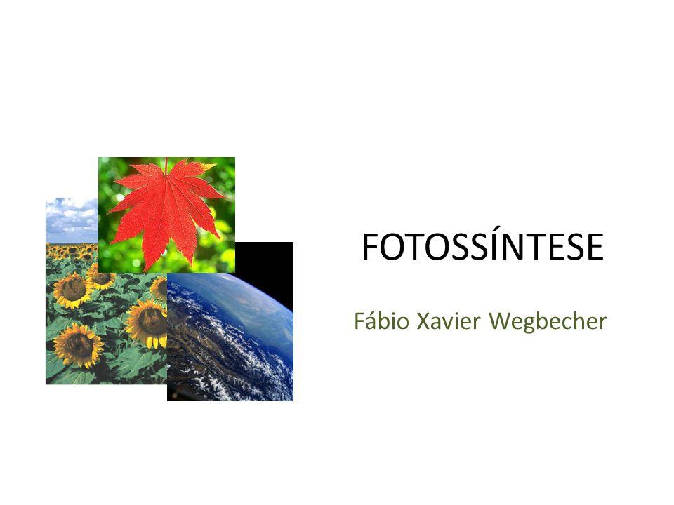 Fábio Xavier Wegbecher