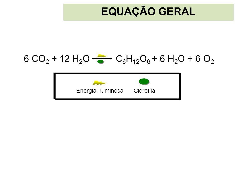 EQUAÇÃO GERAL 6 CO2 + 12 H2O C6H12O6 + 6 H2O + 6 O2 Clorofila