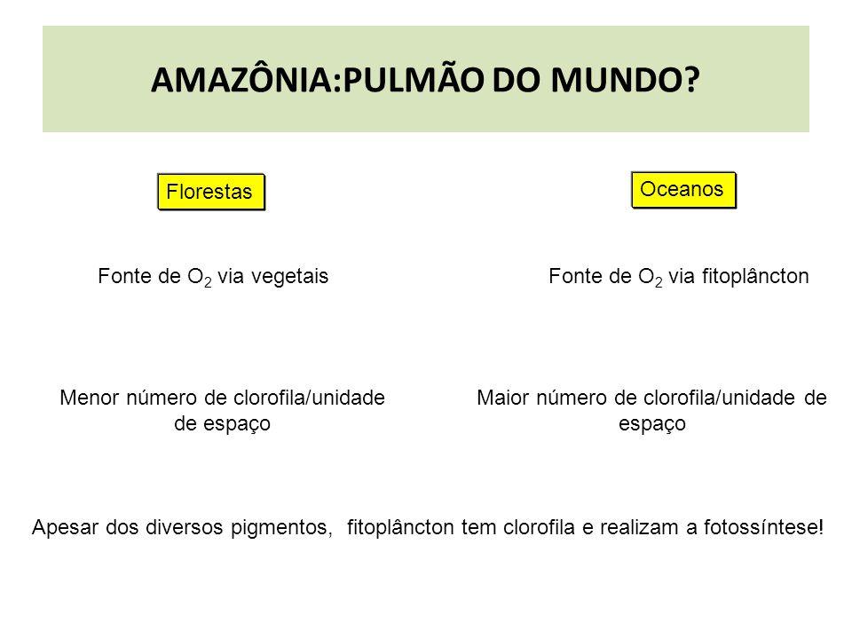 AMAZÔNIA:PULMÃO DO MUNDO