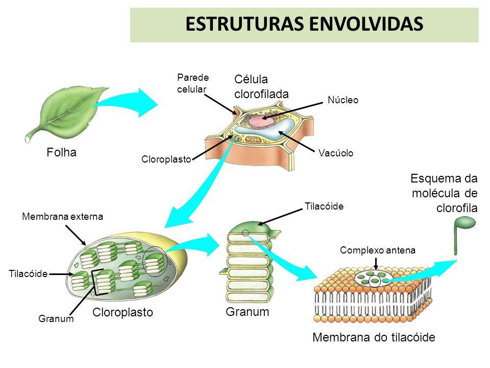 ESTRUTURAS ENVOLVIDAS