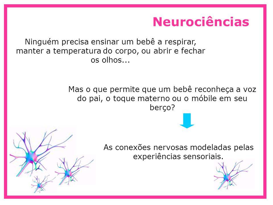 As conexões nervosas modeladas pelas experiências sensoriais.